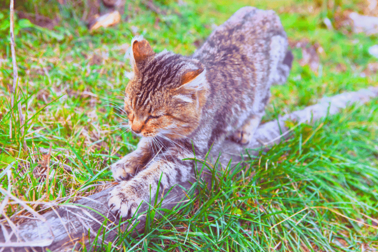 cat trimming her nails on a tree
