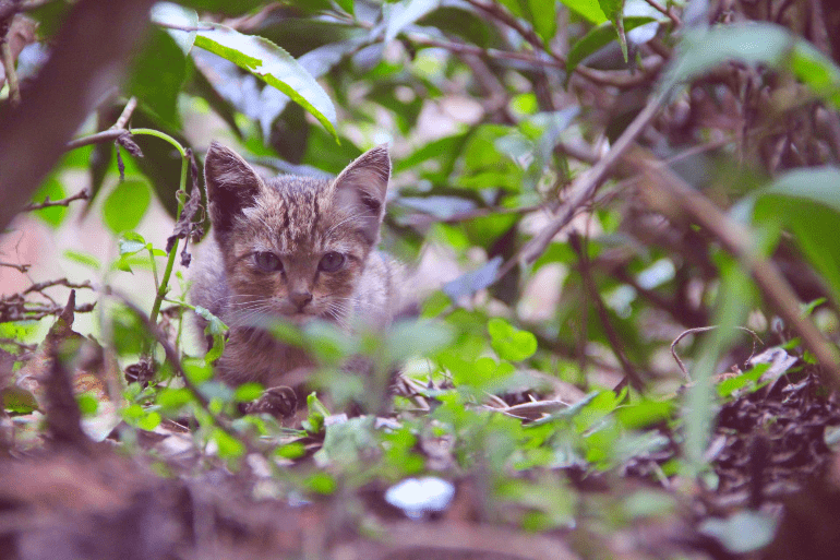 Image of a cute kitten in the wild