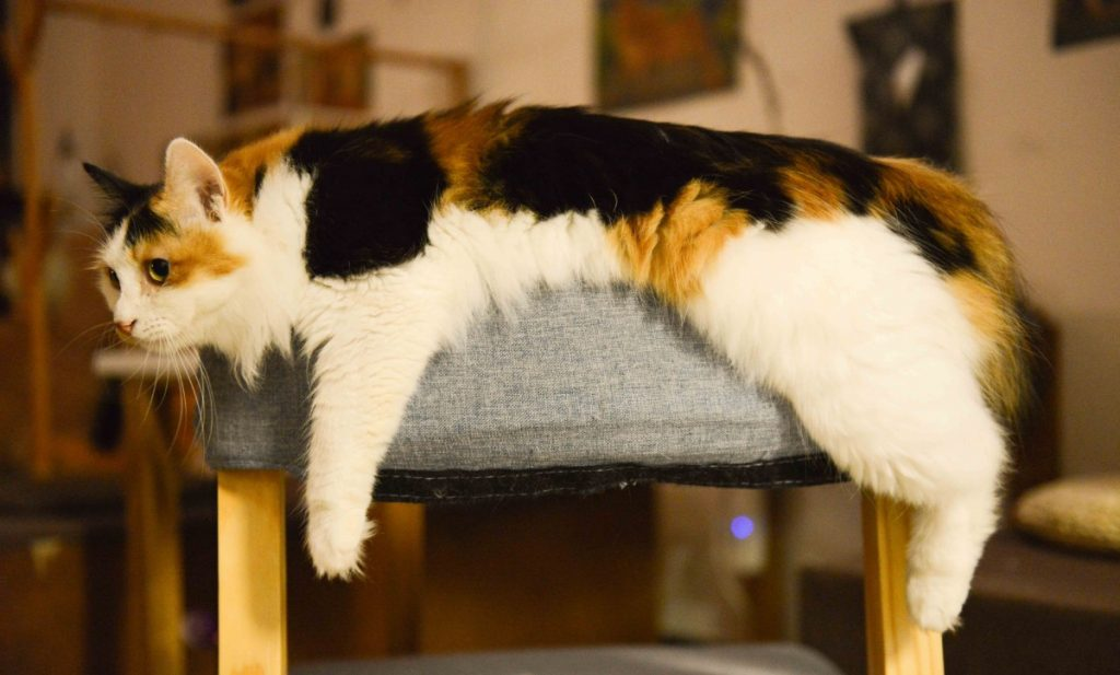 Image of a lazy cat laying on a sofa