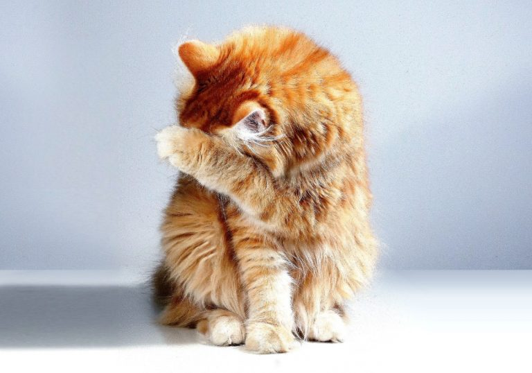 cat covering face and nose