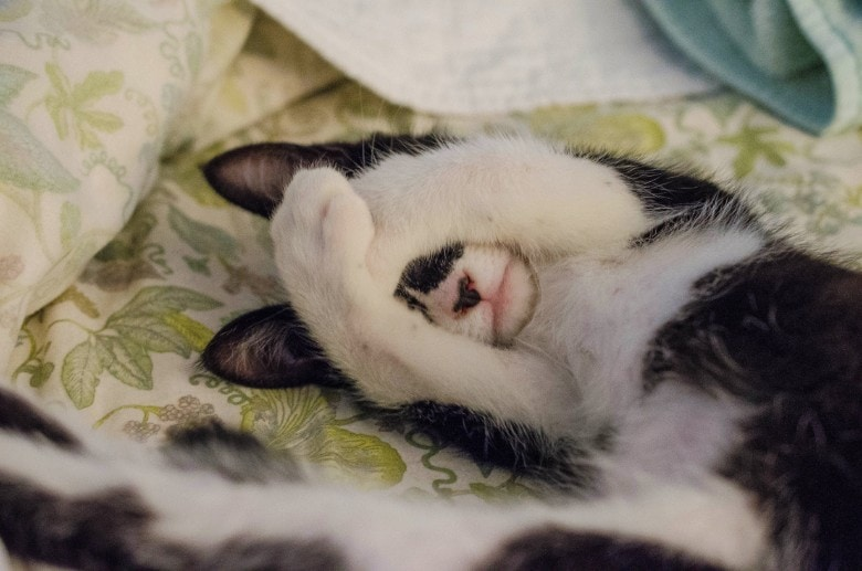 Photo of a cat covering her face with his paws, maybe because her litter box smells so bad?