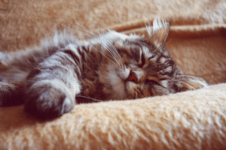 Image of a relaxed fluffy cat sleeping on the couch
