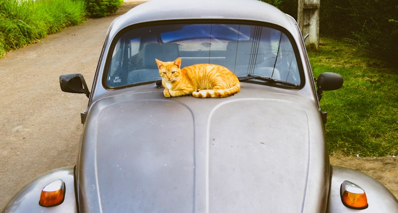 image of a cat laying on an old, stylish car during a trip