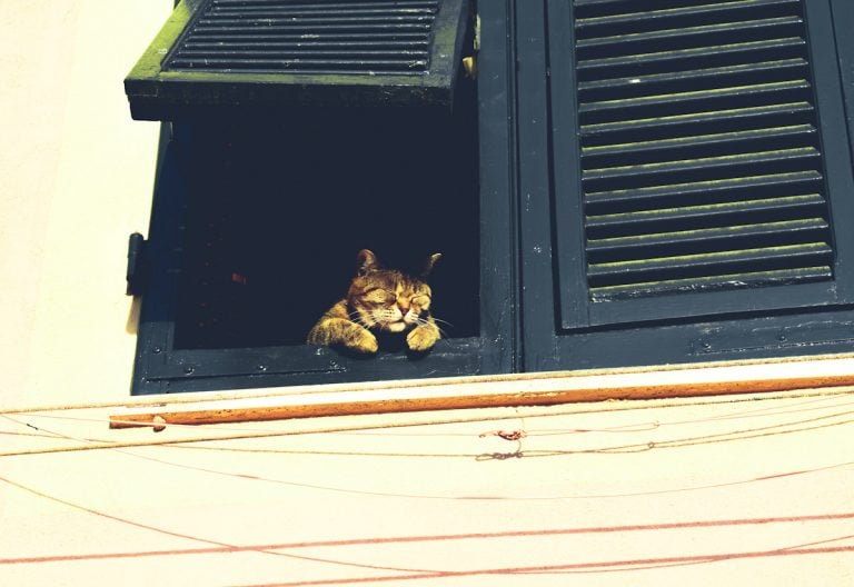 Image of the cutest cat staring out of the window
