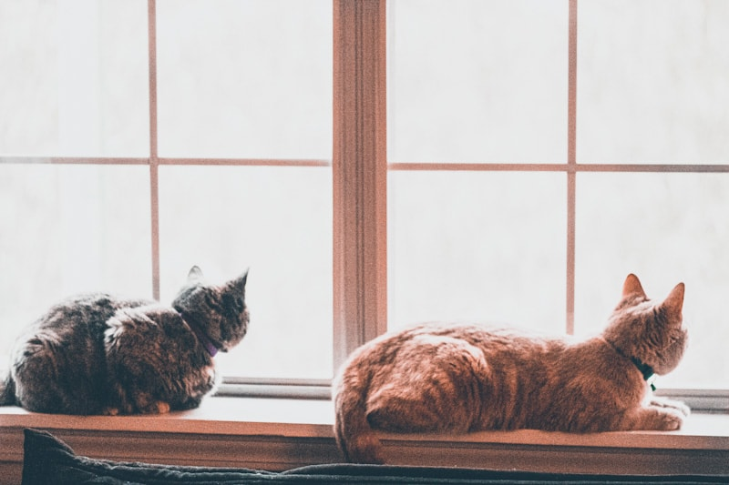Image of two cats staring out of a window