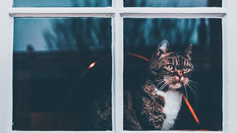 Image of a beautiful cat, carefully staring out of the window
