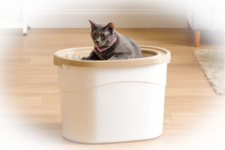 Cat on top of a IRIS Top Entry Litter Box