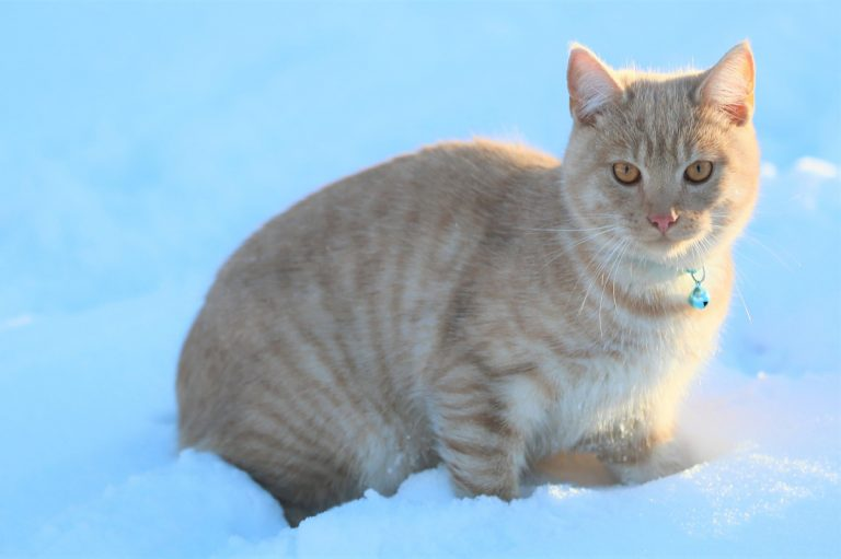 PHOTO OF A CAT IN THE SNOW