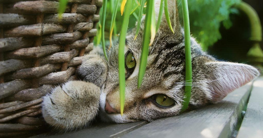 Photo of cat with catnip