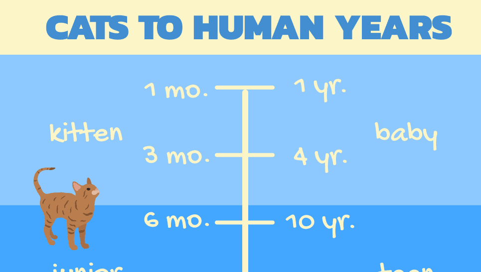 Cat Years Chart (cover image)