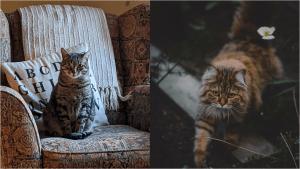 indoor vs outdoor cats
