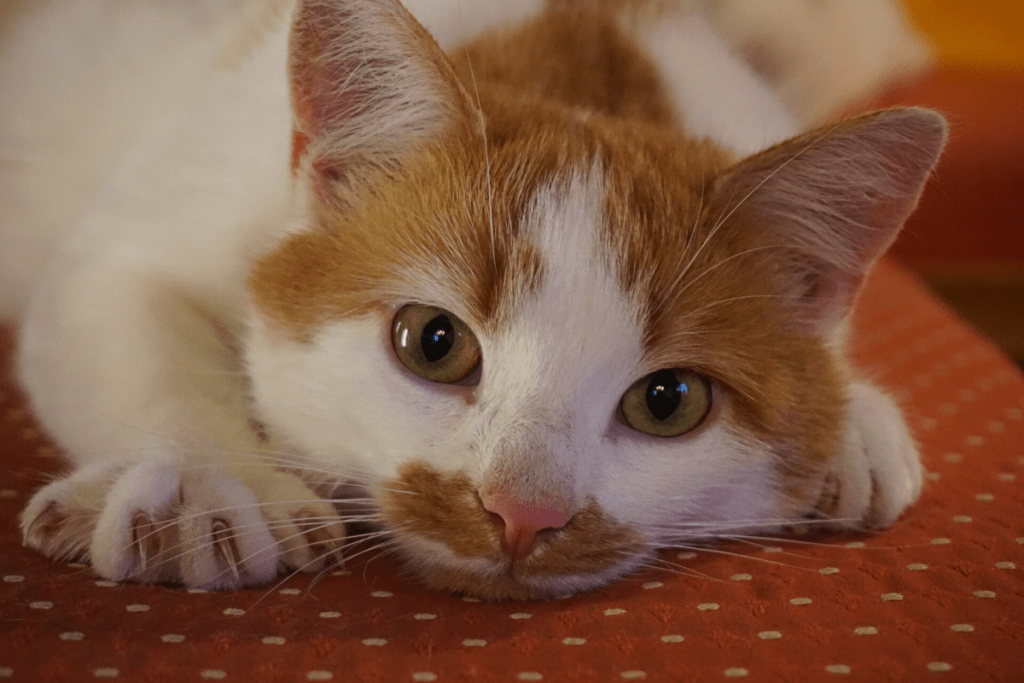 Young cat with sharp claws