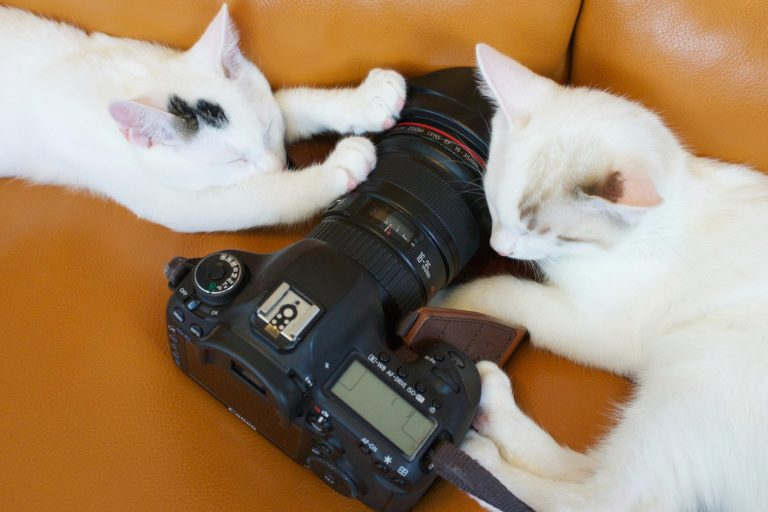 cats with camera