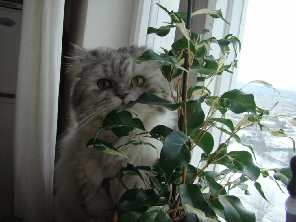 cat houseplant