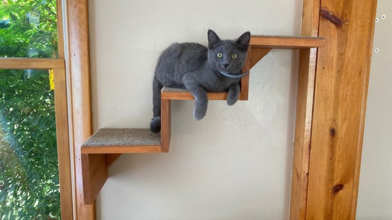Cat on mounted stairs